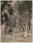 untitled (Yosemite Landscape in Snow)