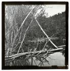 Beaver Dam, Parley's Park