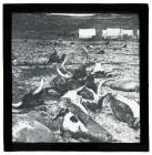 Slaughterhouse at Camp, Blue Creek