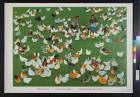 untitled (field of chickens)
