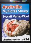 Australia mutilates sheep