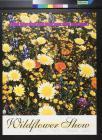 Wildflower Show