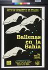 Ballenas en la Bahia