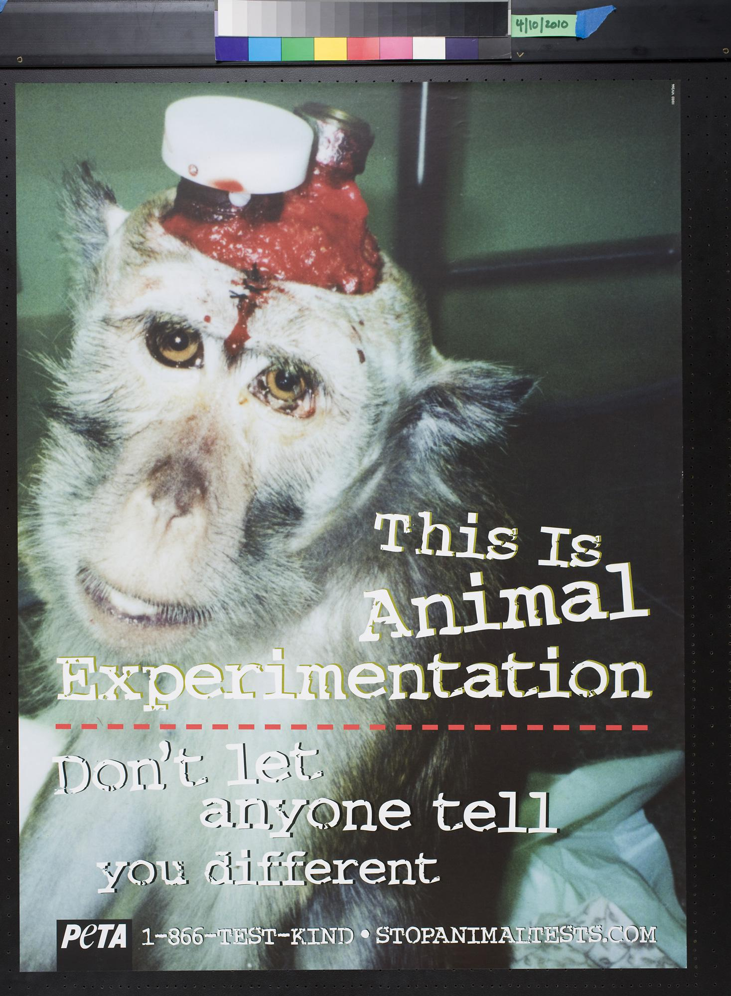 Animal Experimentation Essay