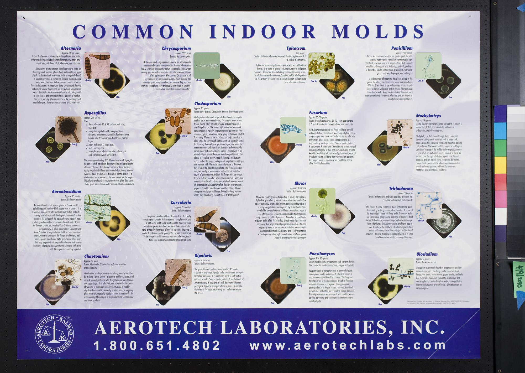 2010 54 13353 Back To Search Results Common Indoor Molds