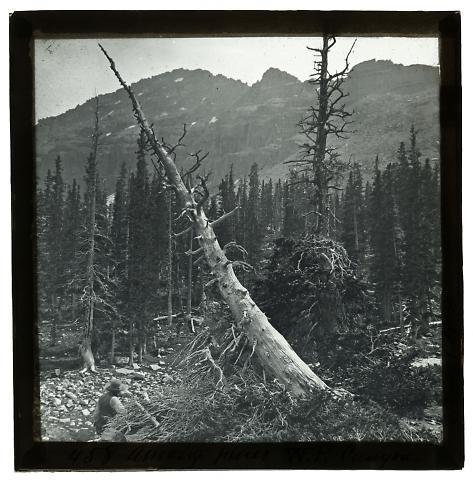 Among Pines, White Pine Canyon