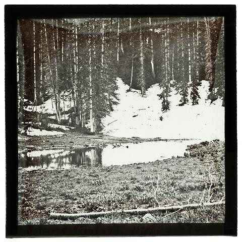 Snow and Timber, White Pine Canyon
