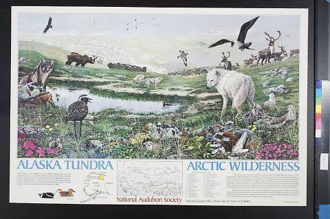 Alaska Tundra/Arctic Wilderness