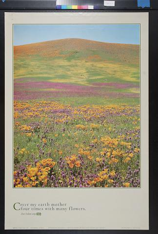 untitled (meadow of flowers)
