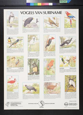 Vogels Van Suriname