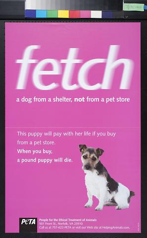 fetch