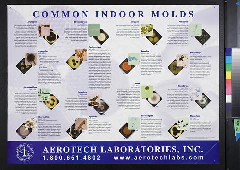 Common Indoor Molds