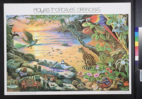 Playas Tropicales Arenosas